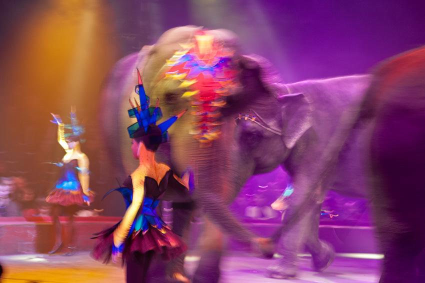03-Le cirque