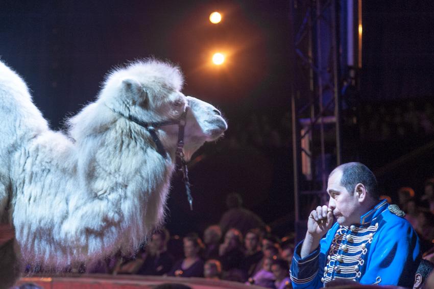 24-Le cirque